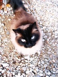 Sherrie's Cat, Tawny