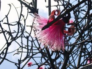 Hawaiian Blossom