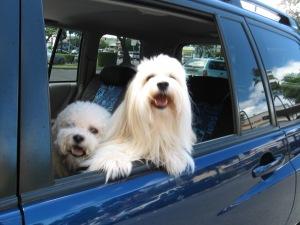 Kailua Car Dogs