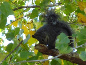 Grateful Squirrel