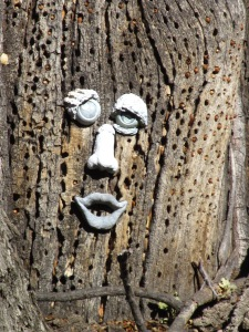 Tree Face :))