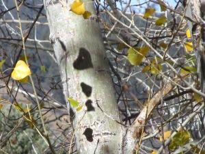 Fall Leaf Shadow Bells