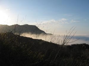 Malibu Fog