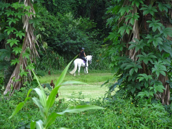 White Horse in Green