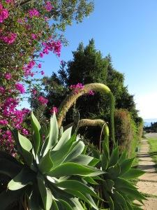 Malibu Winter Foliage!