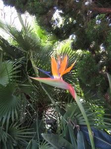 Malibu Bird of Paradise