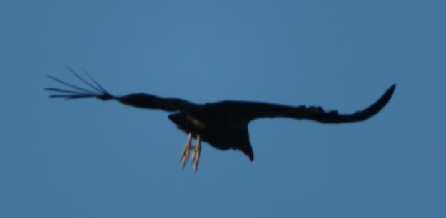 Landing Gear Down -- Condor style