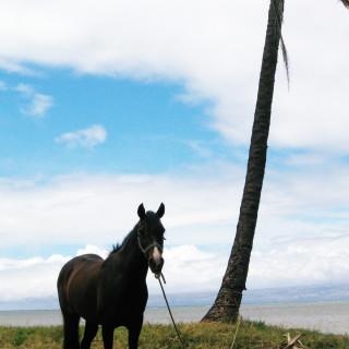 "Molokai rope ""Corral"""